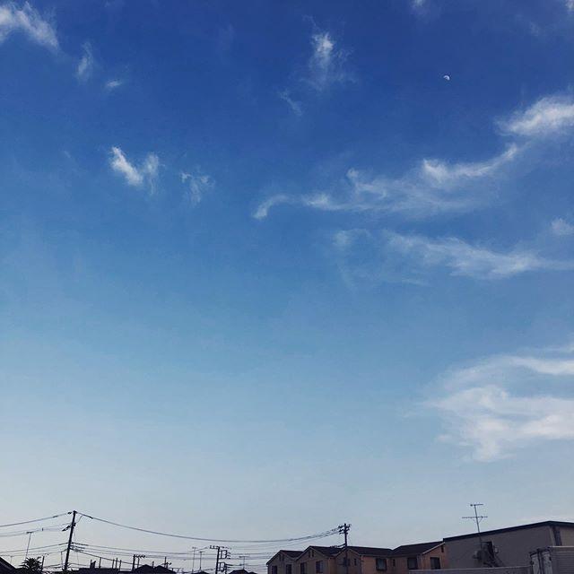 久しぶりの青い空。上弦過ぎの月も浮かぶ。