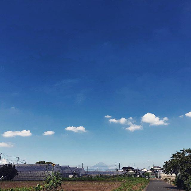 久しぶりに富士山見たなあ