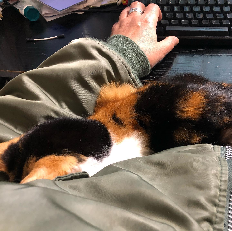 なんなんだこの寒さは。湯たんぽ必須。#cat #ネコ