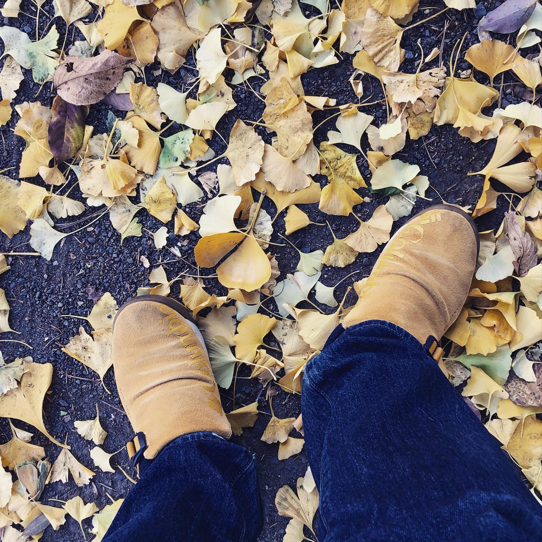 今日の落葉