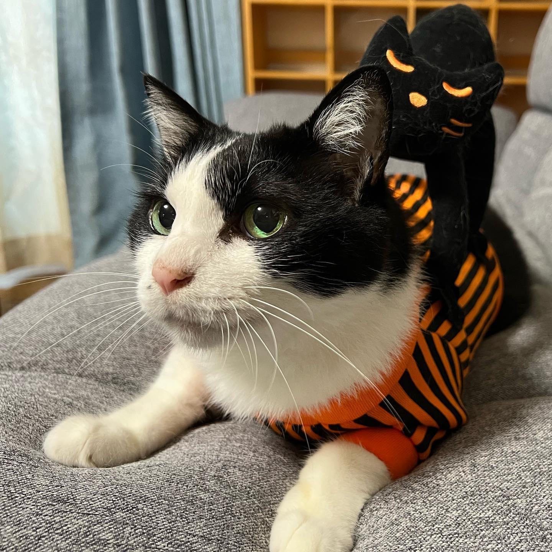 ハロウィンでネコ背負ったハチ
